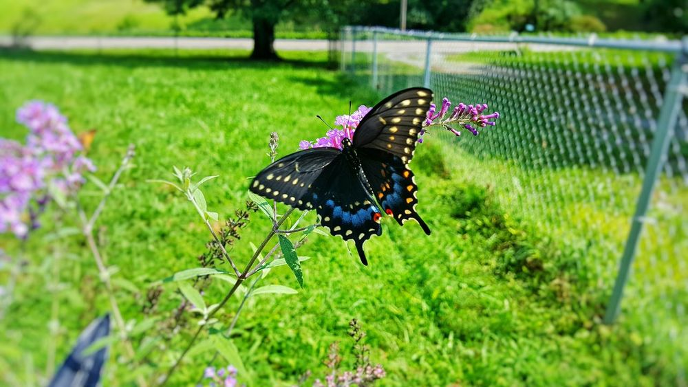 Insect Animal Themes Focus On Foreground Close-up Butterfly - Insect Butterfly Plant Beauty In Nature Nature Selective Focus Fragility Green Color Growth Day Animal Behavior Outdoors Countryside Great Outdoors Natures Beauty Freshness Color Palette Symbiotic Relationship Pollination