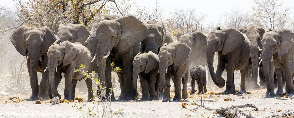 Namibia NamibiaPhotography Animal Themes Elephant Group Of Elephants Nature No People Wildlife