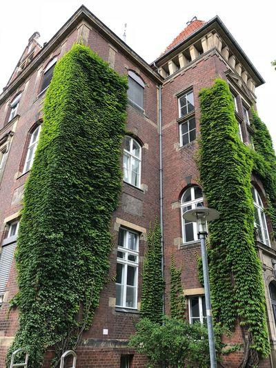 Building Exterior Built Structure Architecture Building Ivy Green Color Low Angle View Outdoors No People House