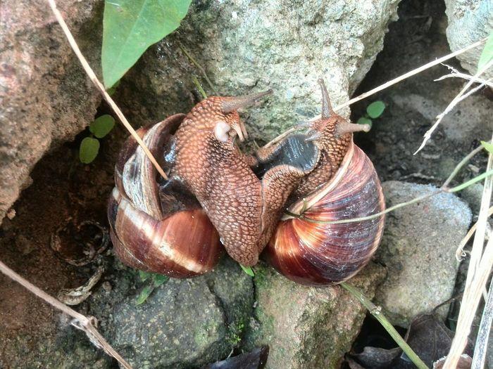 Snail Salyangoz Enjoying Life Hi! OpenEdit Hello World
