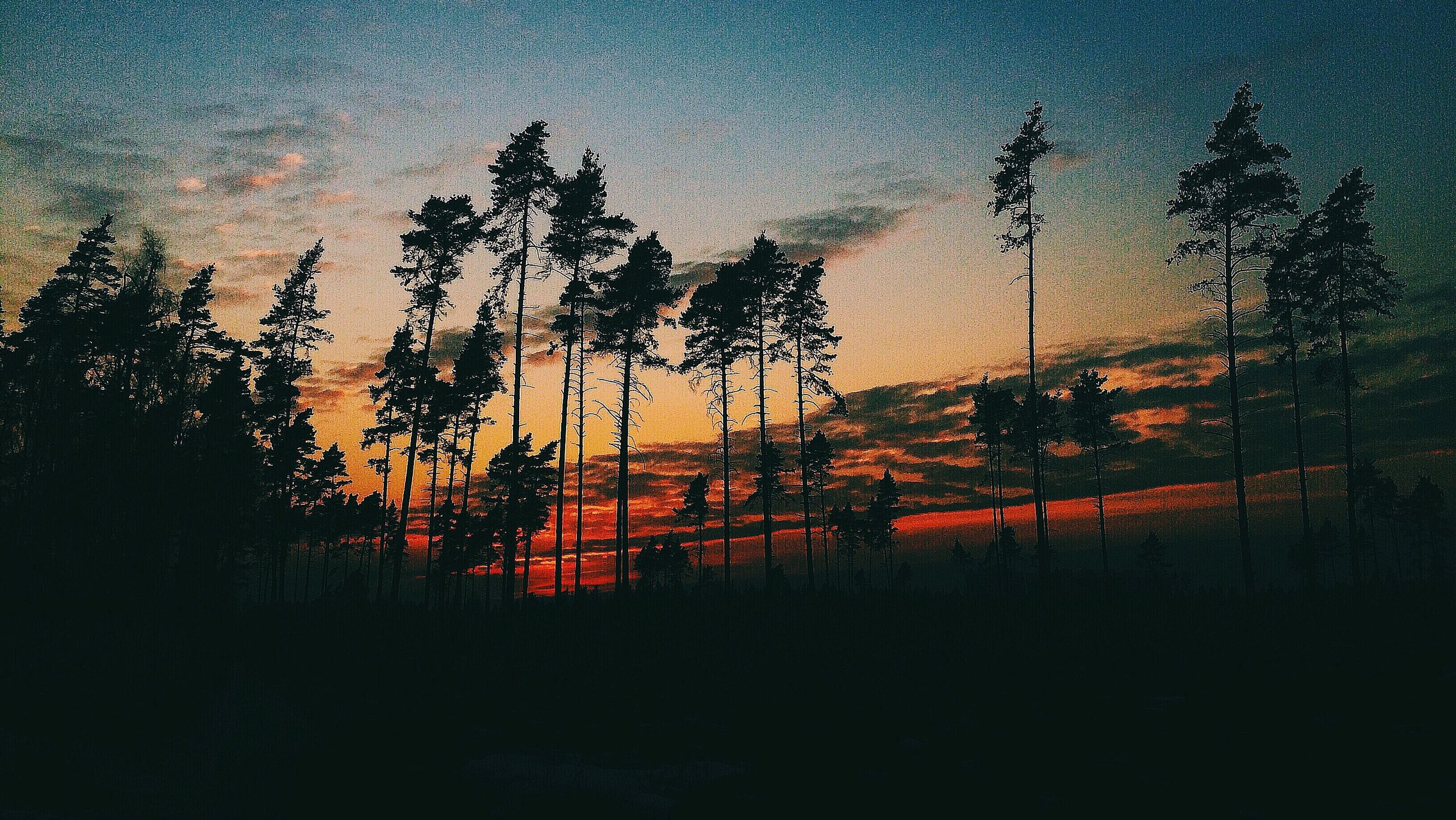 sunset, silhouette, tree, sky, orange color, dusk, scenics, nature, tranquility, dark, beauty in nature, night, tranquil scene, illuminated, window, no people, cloud - sky, weather, transparent, glass - material