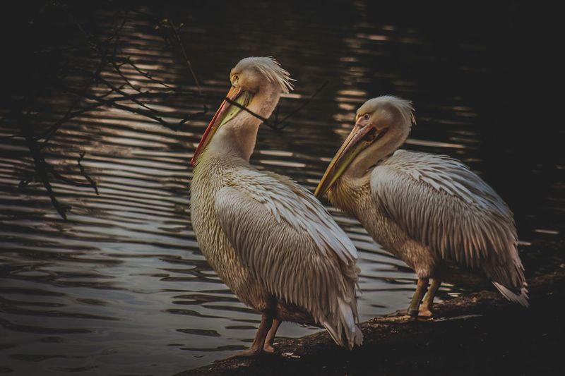 Flamingo life.