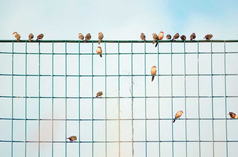 Low angle view of birds perching on metal fence