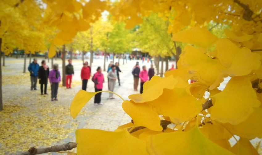 EyeEmNewHere Yellow Large Group Of People Autumn People Day Outdoors Multi Colored Nature Women Tree Crowd Close-up Adult Adults Only