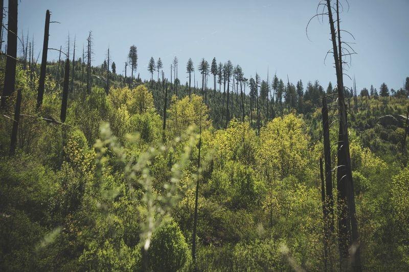 Forest EyeEm