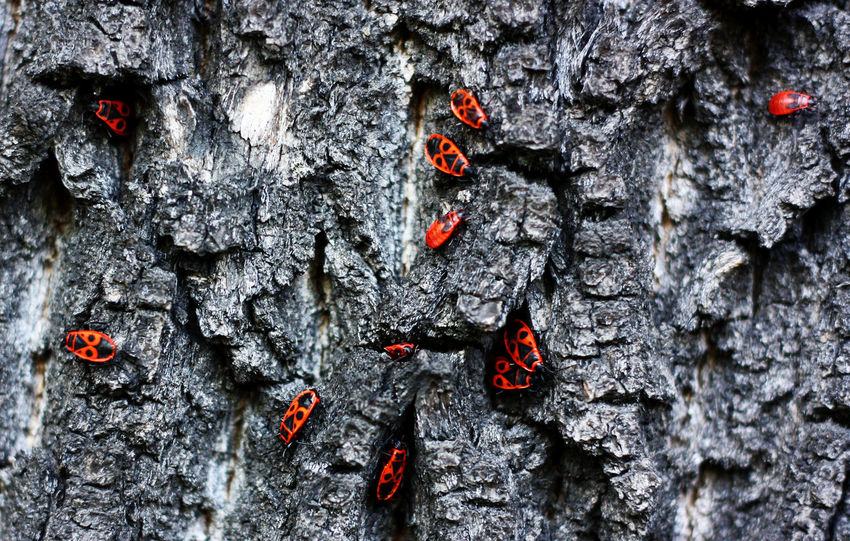 Bugs Bugs! Bugslife Burning Close-up Damaged Dark Tree EyeEm Nature Lover Full Frame Gray Obsolete Outdoors Red Textured  Tree Tree Trunk Tree Trunk
