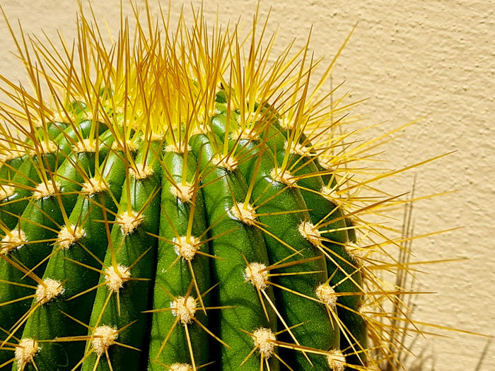High angle view of cactus plants