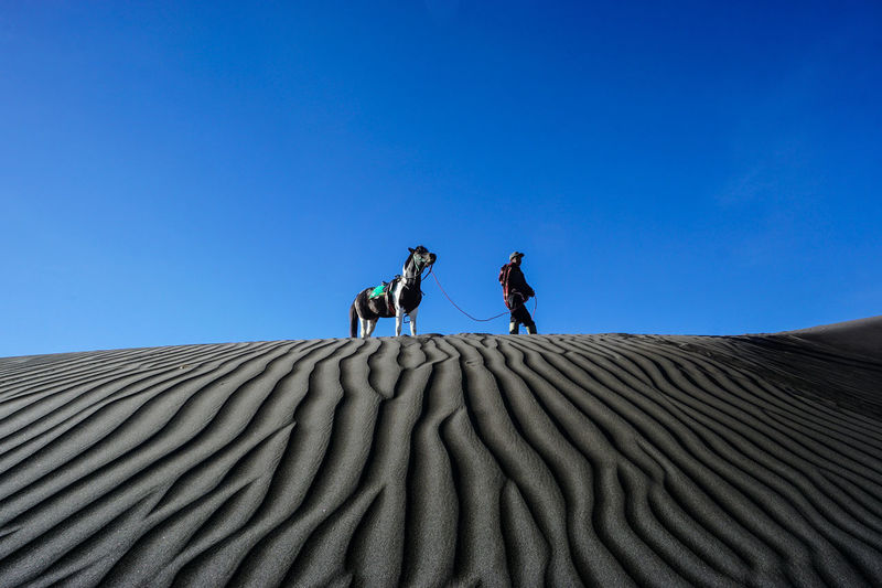 Man Walking With Horse At The Desert
