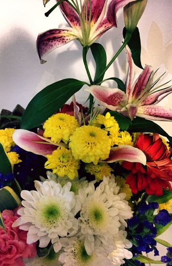 Bouquet Blooms