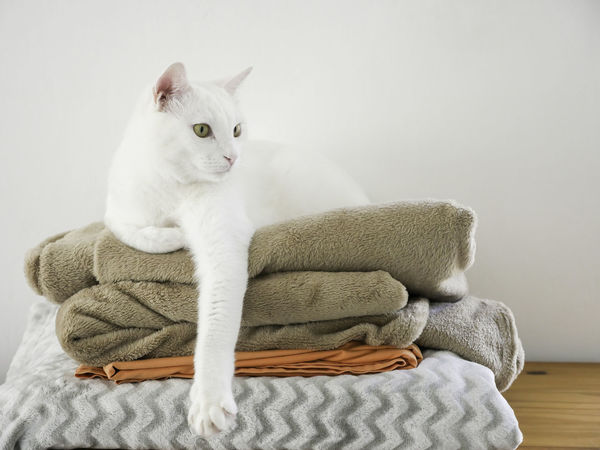 Bed Cat Cat Life Comfortable Comfy  Cute Cat Day Domestic Cat Feline Feline Portraits Furry Friends Horizontal Mammal No People One Animal Paws And Purrs Pet Relax Sofa White Cat