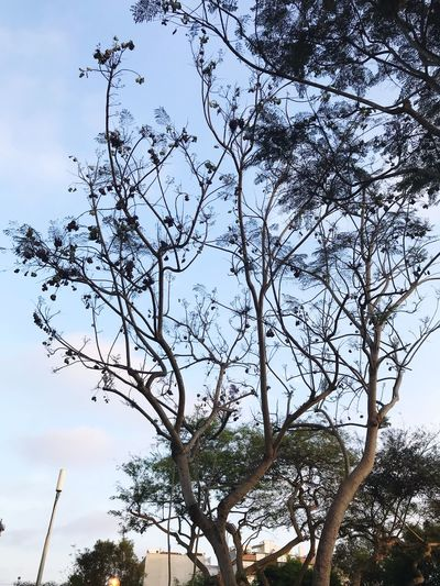 Tree Low Angle View Nature Sky Branch Day Beauty In Nature Outdoors Growth No People Bare Tree EyeEmNewHere