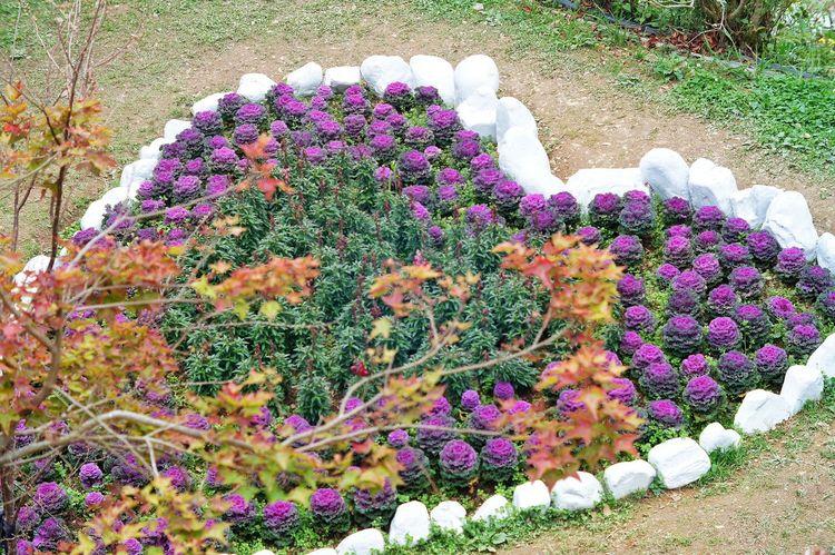 恩愛農場 Day 臺灣 Taiwan Plant High Angle View Flower Growth Multi Colored Outdoors Nature Beauty In Nature No People Purple Green Color Freshness Fragility