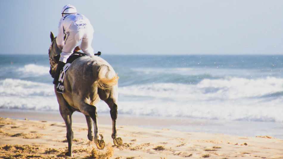 'Magic Millions' horse race at Surfers Paradise Beach, Gold Coast - Australia    10th January 2017    Adult Animal Themes Beach Competition Day Equine Full Length Horizon Over Water Horse Horse Racing Jockey Mammal Nature One Animal One Man Only One Person Only Men Outdoors People Racehorses Sand Sea Sky Sport Water