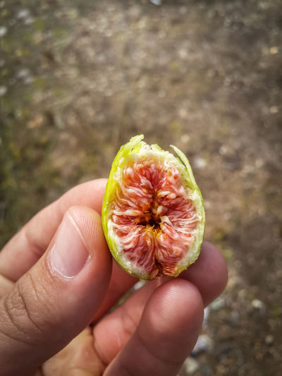 Close-Up Of Hand Holding Half Of Green Fig
