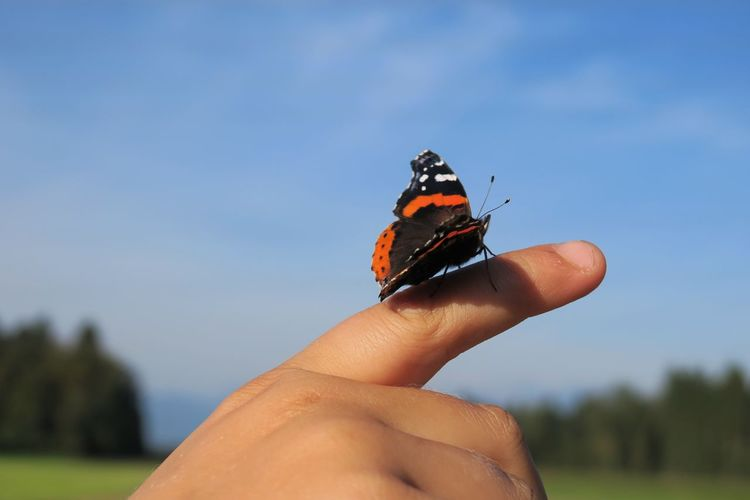 Close-up of a butterfly on the finger of a child