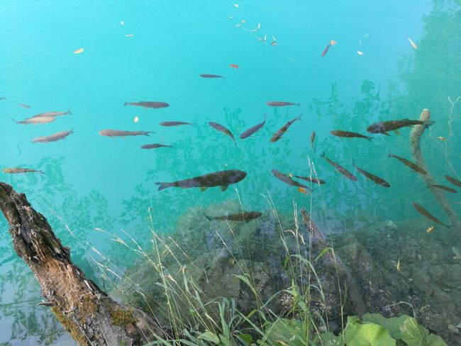 Nofilter Nofilterneeded Lake Turquoise Fish Aquarium Lakes And Mountains Lakes  Croatia Croatian Nature Mountains Park National Park Vacation Destination Dream Heaven