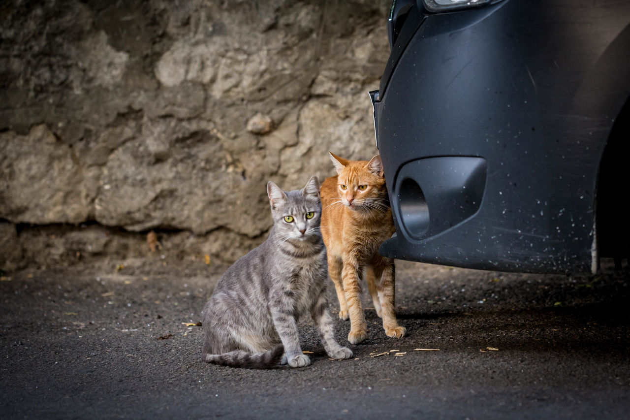 Cats Sitting By Cars