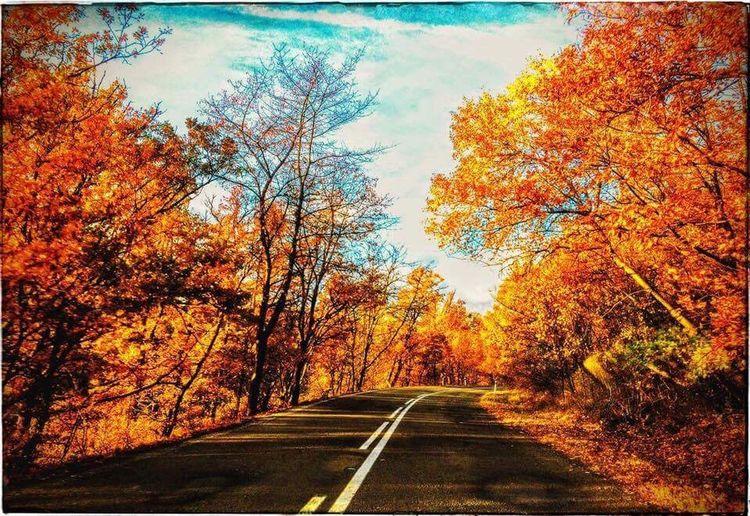 Autumn 579