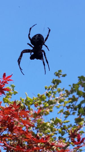 Summer Sunshine Autumn Spider Beauty In Nature