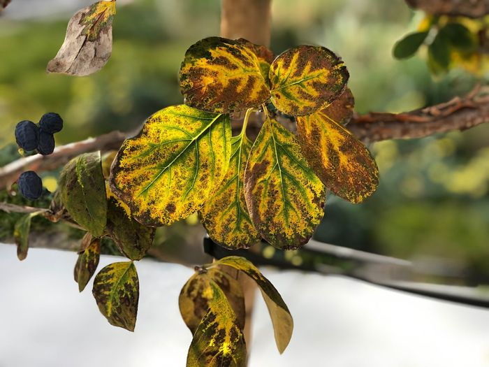 Close-up of yellow leaves against blurred background