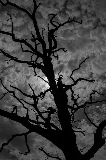 Bare Tree Branch Cloud Cloud - Sky Cloudy Outdoors Silhouette Sky Stark Tree Weather