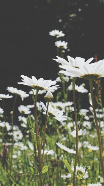 Flowers Light Outside Non-urban Scene White Nature Photography Summer England Grass Nature Photography Nature_collection