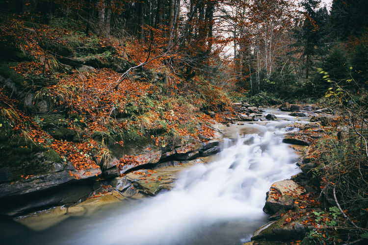 Scenic View Of Stream Amidst Trees During Autumn