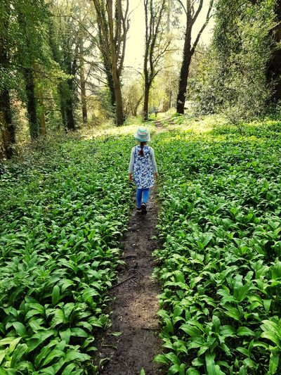 child walking through the woods Woods Walking Plants Nature EyeEmNewHere Green Girl Child Walking Standing Childhood Field Grass Plant Green Color