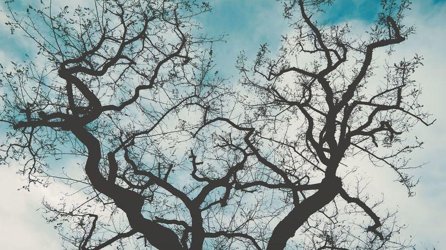 Tree Sky Branch