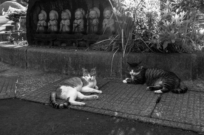 Art Blackandwhite Cat Japan Jizo Monochrome Streetphotography Phtographer EyeEmBestPics Black And White Helloworld Snapshots Of Life スナップ写真 Artな写真 モノクロ 写真家 福井県 日本 スナップ Phtography ねこ Cats