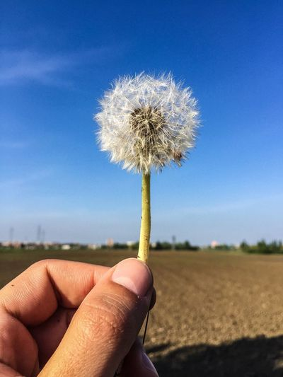 Dandelion Dream Europe EyeEm Gallery That's Me EyeEm Nature Lover EyeEm Best Edits Italia EyeEm Check This Out EyeEm Best Shots Hello World Nature Sky Hanging Out Dandelion
