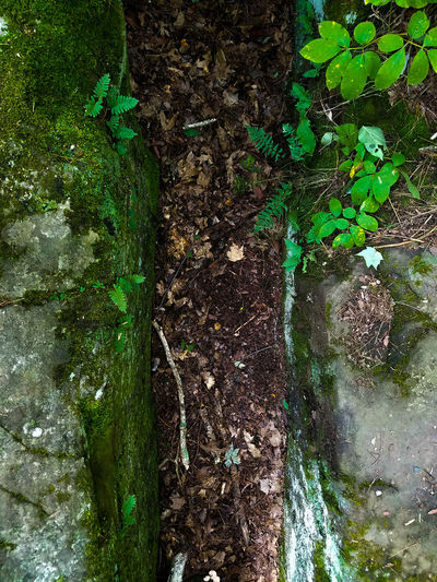 Green Color Backgrounds Full Frame No People Day Outdoors Close-up Nature Leaves Beauty In Nature Fall Explore Rocks State Park  State Forest Rock Formation Nature Photography Forest Photography ForestGreen Rock Stone Moss Nature Minnesota The Great Outdoors - 2018 EyeEm Awards