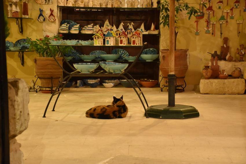 Catoftheday Creta ❤ Enjoing The Night!  Small Shop Chania By Night Holidays ☀