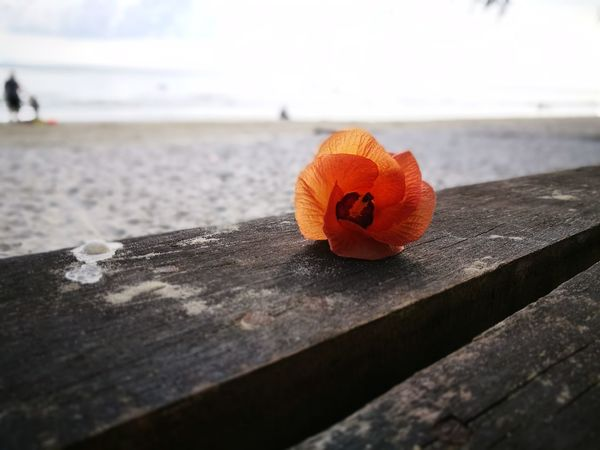Trat sea of Thailand. Sea Beach Flower No People Nature Outdoors Day Sunlight Close-up Beauty In Nature Water Sky Horizon Over Water Freshness