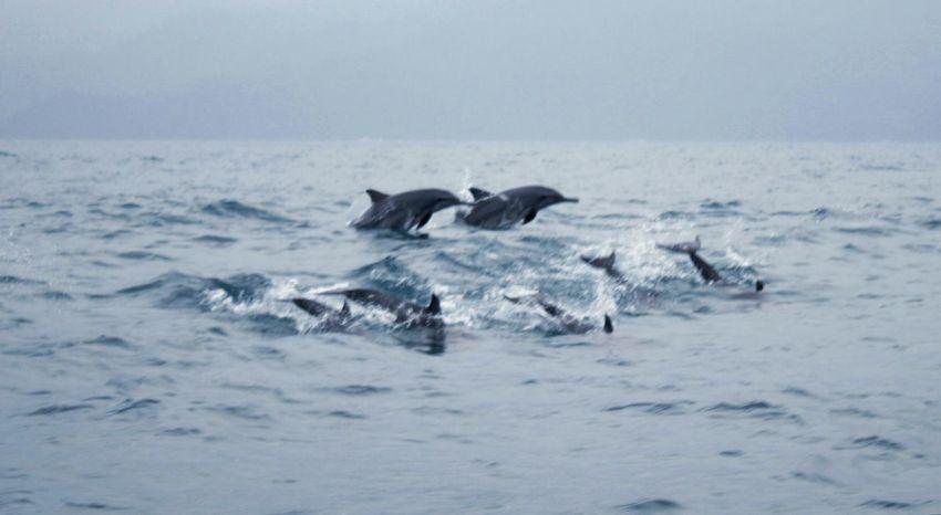 new friends Dolphin Dolphinswim Holiday Trip Teluk Kiluan Explorelampung WonderfulLampung