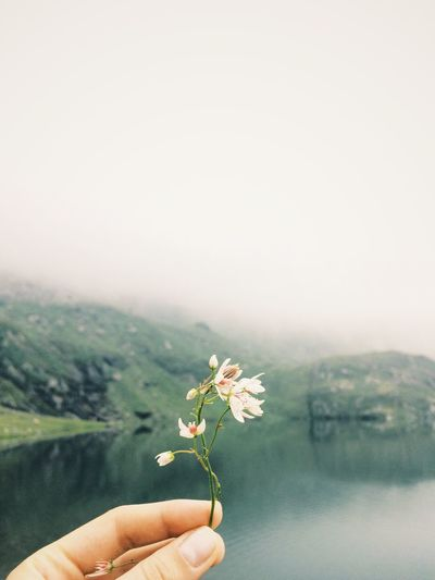 Human Hand Holding One Person Human Body Part Flower Lake Green Green Hues Mountain Mountain Flowers Nature Outdoors Close-up Nature Beauty In Nature Day Copy Space