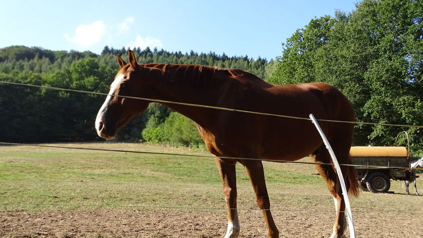 Animal Animal Themes Beatuy Field Horse Koppel Majestic Pferd