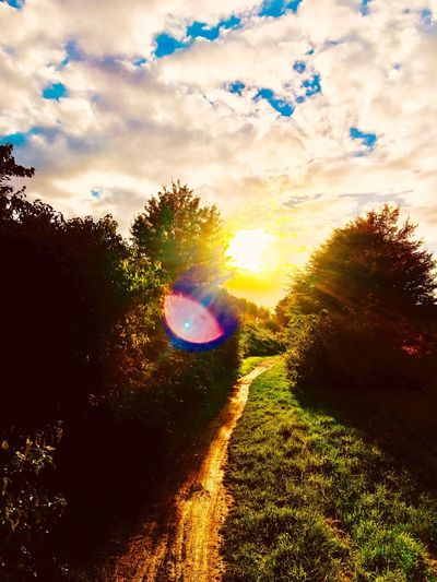 Ein einfacher Spaziergang Nature Sun No People First Eyeem Photo