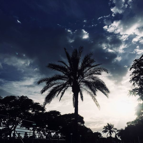 Barcelona Tree Sky Plant Silhouette Cloud - Sky Low Angle View Growth Nature Beauty In Nature Palm Tree Tropical Climate Tranquility Outdoors Star - Space