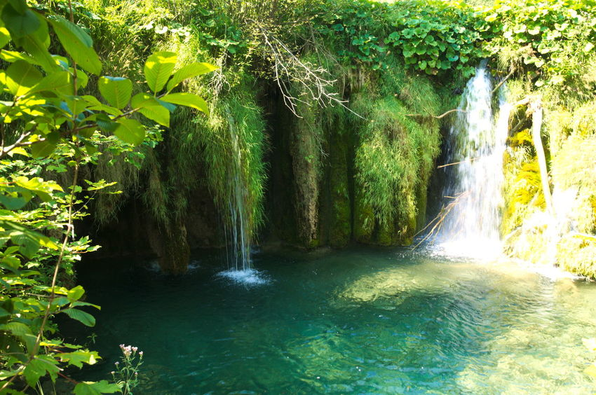 Green Waterfall Beauty In Nature Cave Day Flowing Flowing Water Forest Green Green Color Idyllic Motion Nature No People Non Urban Scene Outdoors Plant Plitvice National Park Tranquil Scene Tranquility Tree Water Waterfall