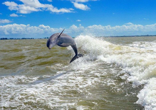 Sea One Animal Water Sea Life Day Animals In The Wild Animal Themes No People Animal Wildlife Mammal Nature Outdoors Beach Sky Wave Horizon Over Water Beauty In Nature UnderSea