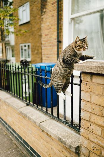 Cat on window of building