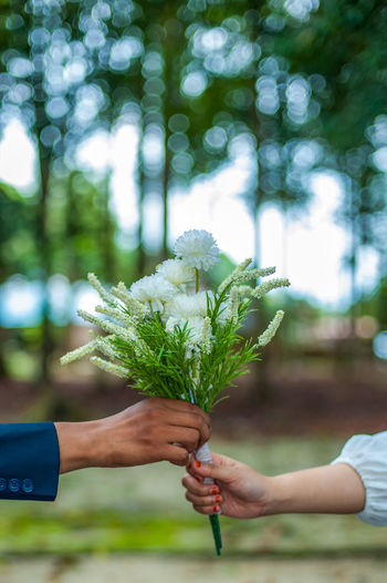 Cropped hand of person holding white flowering plant