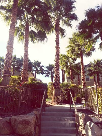 Stairway to Paradise Palm Trees Landscape Nature Vibrantlife Vegas  Nature Photography