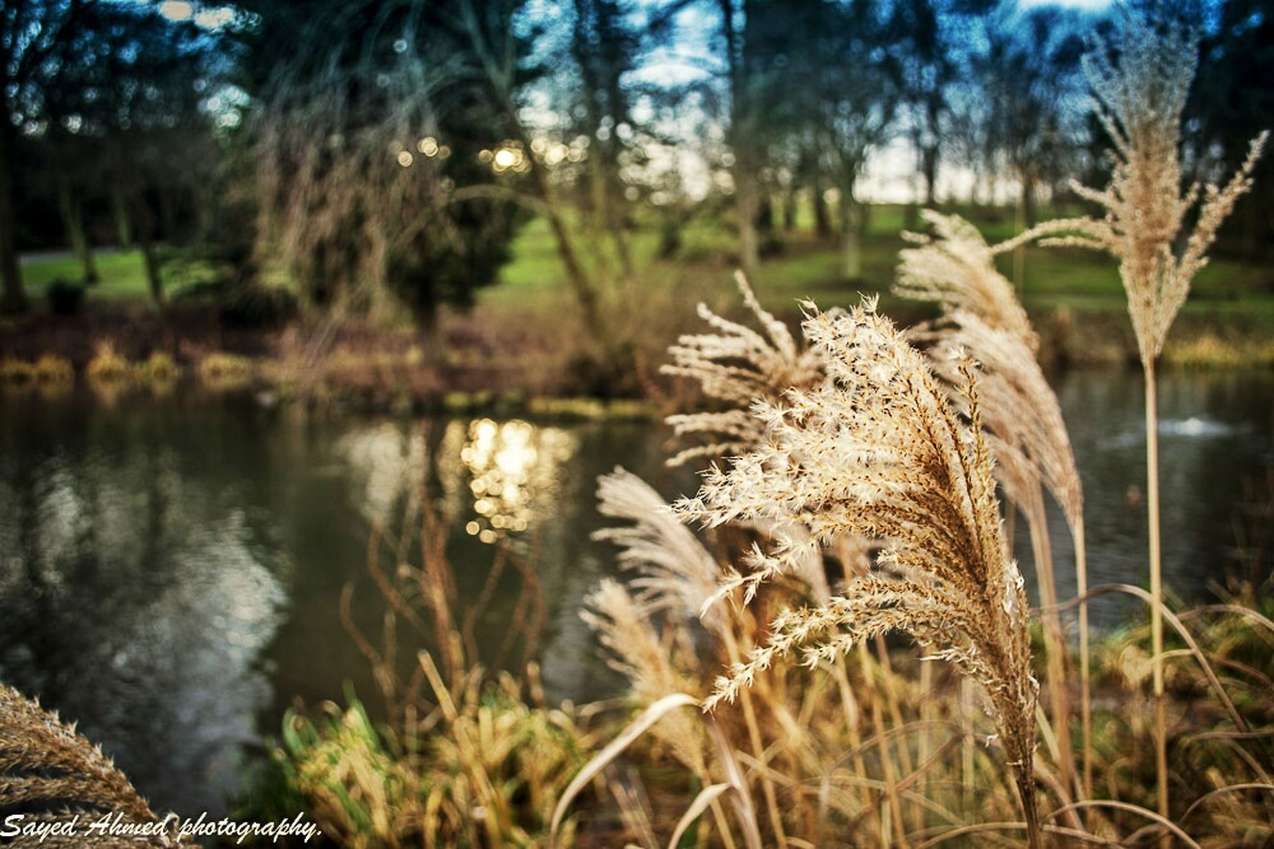 animals in the wild, animal themes, wildlife, focus on foreground, grass, nature, growth, plant, bird, tree, one animal, tranquility, beauty in nature, lake, field, forest, day, no people, outdoors, water