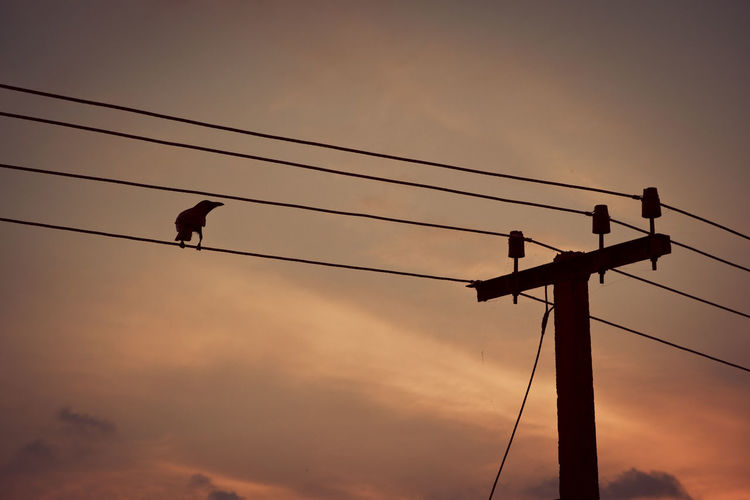 Low angle view of silhouette bird perching on electric pole cable against sky during sunset