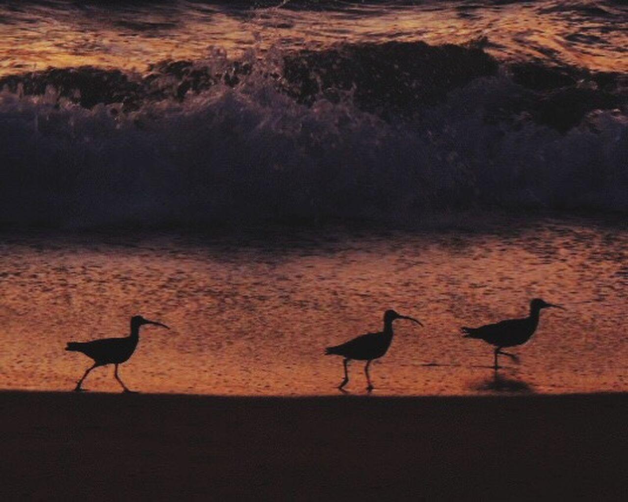 animals in the wild, bird, animal wildlife, animal themes, sunset, two animals, silhouette, no people, outdoors, nature, water, scenics, travel destinations, night, flamingo, ibis, mammal