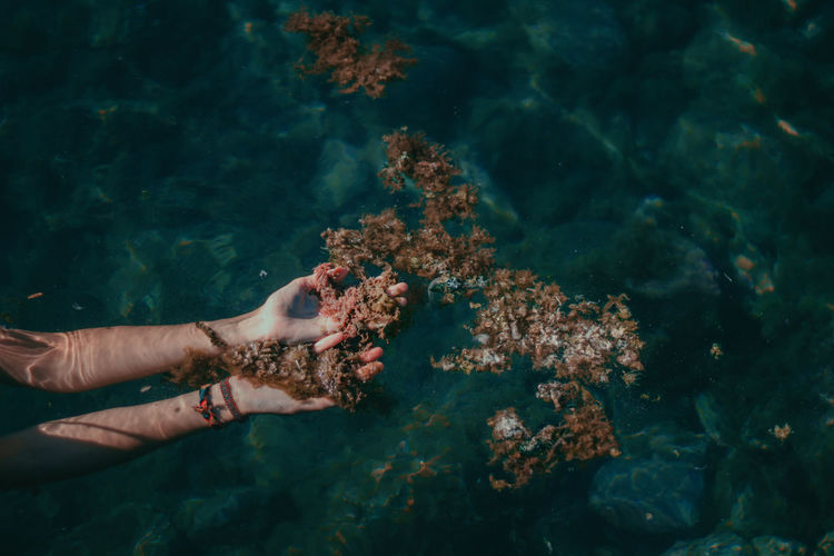 Cropped hand of woman touching coral by sea