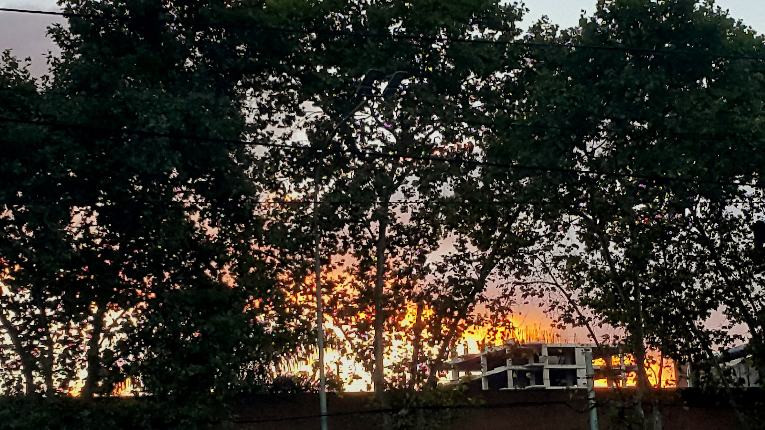 tree, growth, sunset, branch, orange color, tranquility, nature, built structure, beauty in nature, building exterior, tranquil scene, low angle view, architecture, house, scenics, sunlight, outdoors, no people, sky, idyllic