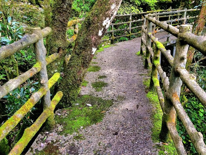 Nature Nature_collection Nature Photography Path Pathway Road Green